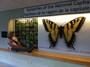 Butterfly Wall at Carleton with Rick Cavasin -                     Oct. 2013